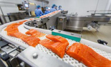 Darłowo, Дарлово, работать на рыбе, рыбное предприятие, упаковка лосося, разнорабочий на рыбу, паковать рыбу в Польше, работать на упаковке, паковать в Польше, работать в цеху в Польше