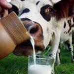 доить коров, дояр, работать на ферме, работать с коровами, фермер