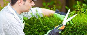 Brodowo, косить траву, подрезка деревьев, подготовка грунта, садовник, садовник в Польшу, работать садовником