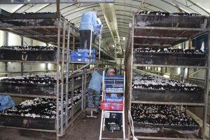 2348, сбор грибов, собирать грибы, выращивать грибы