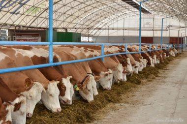 9631, семейная пара на ферму, работа для семейной пары на ферме, работать на ферме в Польше
