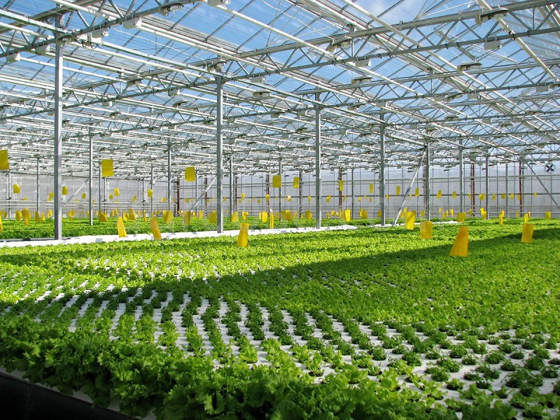 9628, работник теплицы, работать в Польше в теплице, помощь в выращивании цветов
