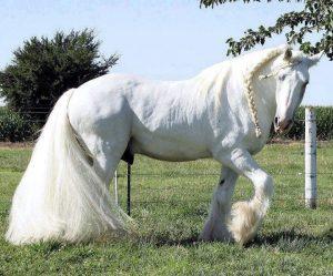 2636, работать на ферме, конюх, конюх в Польшу, работать конюхом