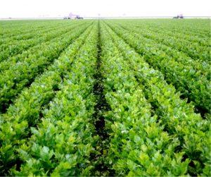 2650, работать в поле, помощник фермера, работать помощником фермера, фермер, фермер в Польшу, актуальная вакансия фермера