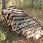 2680, лесник, работать в лесу, работать в лесу в Польше, лесник в Польшшу