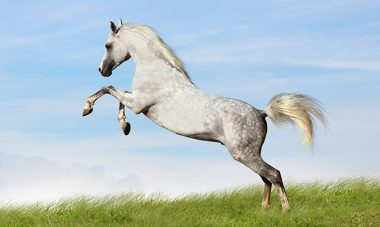 4703, конюх, рабочий на ферме, работать конюхом, конюх в Польше, актуальная вакансия конюх
