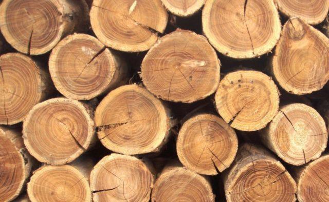 4695, работать на лесопилке, пилить деревья в лесу, работать на лесопилке в Польше