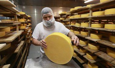 9694, производство сыра, работать на производстве, производить сыр в Польше