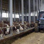 5717,тракторист,феремер, работать в Польше на тракторе, уход за коровами