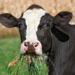 4734, ферма, фермер, работать с коровами, работать на ферме с коровами